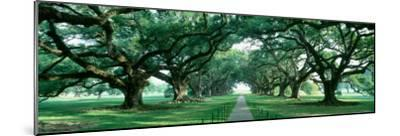 Louisiana, New Orleans, Brick Path Through Alley of Oak Trees--Mounted Photographic Print
