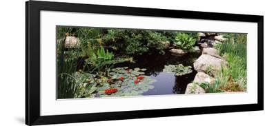 Water Lilies in a Pond, Sunken Garden, Olbrich Botanical Gardens, Madison, Wisconsin, USA--Framed Photographic Print