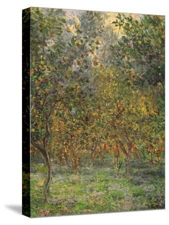 Lemon Trees, 1884-Claude Monet-Stretched Canvas Print