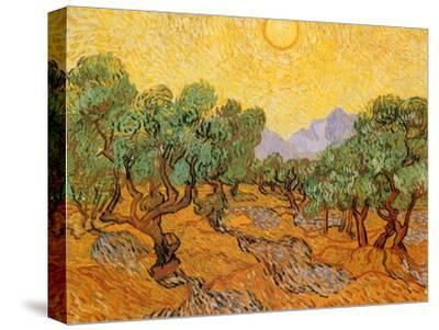 Sun over Olive Grove, 1889-Vincent van Gogh-Stretched Canvas Print