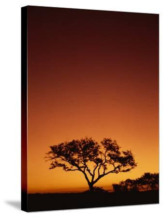 Single Tree Silhouetted Against a Red Sunset Sky in the Evening, Kruger National Park, South Africa-Paul Allen-Stretched Canvas Print
