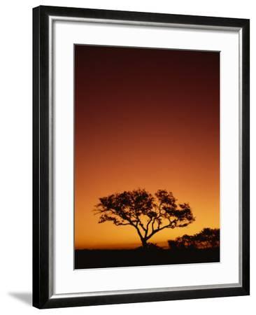 Single Tree Silhouetted Against a Red Sunset Sky in the Evening, Kruger National Park, South Africa-Paul Allen-Framed Photographic Print
