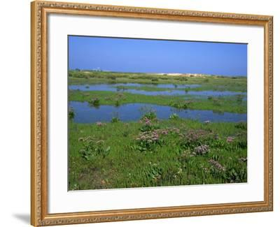 Blakeney Point, Norfolk, England, United Kingdom, Europe-Jean Brooks-Framed Photographic Print