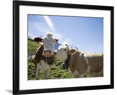 Kleine Scheidegg, Bernese Oberland, Berne Canton, Switzerland, Europe-Angelo Cavalli-Framed Photographic Print