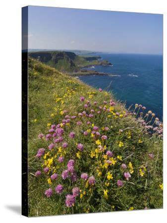 North Antrim Coast Path to the Giant's Causeway, County Antrim, Ulster, Northern Ireland, UK-Neale Clarke-Stretched Canvas Print