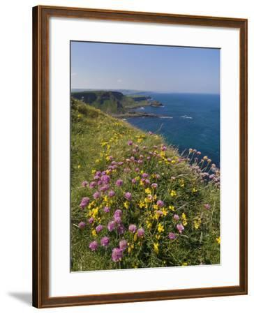 North Antrim Coast Path to the Giant's Causeway, County Antrim, Ulster, Northern Ireland, UK-Neale Clarke-Framed Photographic Print