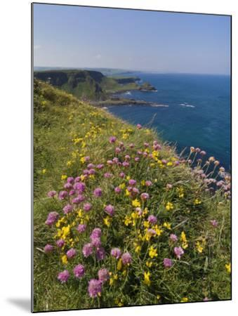 North Antrim Coast Path to the Giant's Causeway, County Antrim, Ulster, Northern Ireland, UK-Neale Clarke-Mounted Photographic Print