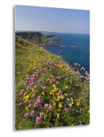 North Antrim Coast Path to the Giant's Causeway, County Antrim, Ulster, Northern Ireland, UK-Neale Clarke-Metal Print