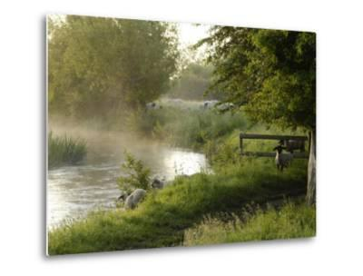 River Windrush Near Burford, Oxfordshire, the Cotswolds, England, United Kingdom, Europe-Rob Cousins-Metal Print