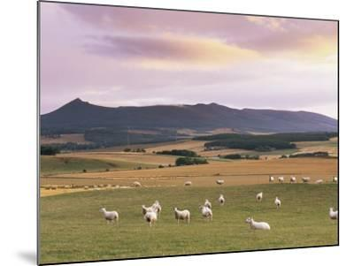 Fields and Sheep Near Oldmeldrum, Aberdeenshire, Scotland, United Kingdom, Europe-Patrick Dieudonne-Mounted Photographic Print