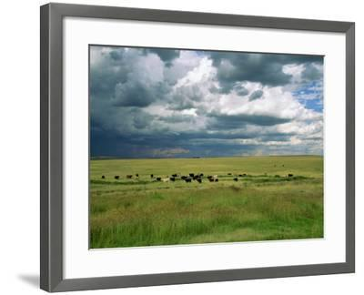 Cattle Ranching, N3 Highway, South Africa, Africa-Alain Evrard-Framed Photographic Print