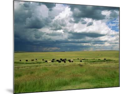 Cattle Ranching, N3 Highway, South Africa, Africa-Alain Evrard-Mounted Photographic Print