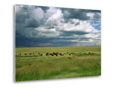 Cattle Ranching, N3 Highway, South Africa, Africa-Alain Evrard-Metal Print