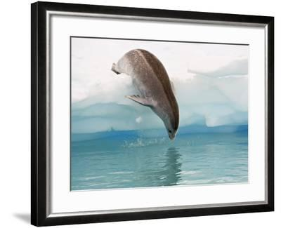 Crabeater Seal Diving into Water from an Iceberg, Pleneau Island, Antarctic Peninsula, Antarctica-James Hager-Framed Photographic Print
