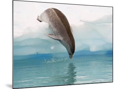 Crabeater Seal Diving into Water from an Iceberg, Pleneau Island, Antarctic Peninsula, Antarctica-James Hager-Mounted Photographic Print