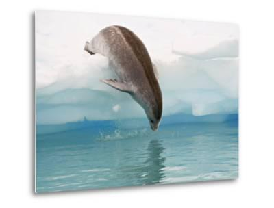 Crabeater Seal Diving into Water from an Iceberg, Pleneau Island, Antarctic Peninsula, Antarctica-James Hager-Metal Print