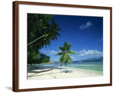 Leaning Palm Tree and Beach, Anse Severe, La Digue, Seychelles, Indian Ocean, Africa-Lee Frost-Framed Photographic Print