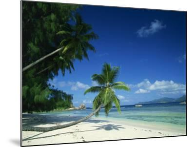 Leaning Palm Tree and Beach, Anse Severe, La Digue, Seychelles, Indian Ocean, Africa-Lee Frost-Mounted Photographic Print