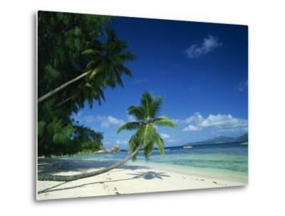 Leaning Palm Tree and Beach, Anse Severe, La Digue, Seychelles, Indian Ocean, Africa-Lee Frost-Metal Print