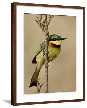 Little Bee-Eater, Masai Mara National Reserve, Kenya, East Africa, Africa-James Hager-Framed Photographic Print