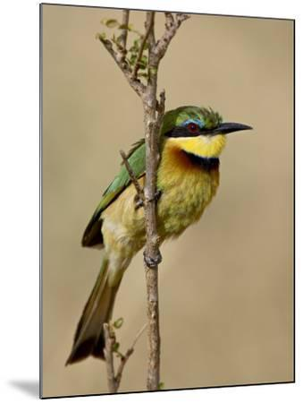 Little Bee-Eater, Masai Mara National Reserve, Kenya, East Africa, Africa-James Hager-Mounted Photographic Print