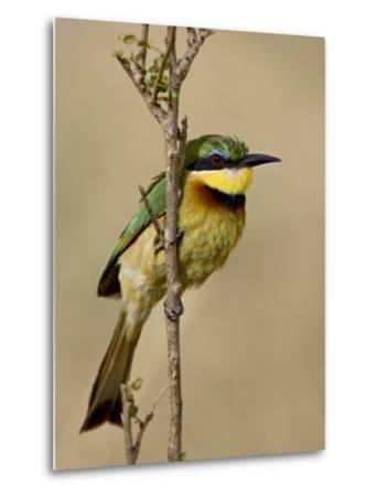 Little Bee-Eater, Masai Mara National Reserve, Kenya, East Africa, Africa-James Hager-Metal Print