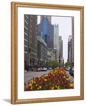 Spring Tulips on North Michigan Avenue, Chicago, Illinois, United States of America, North America-Amanda Hall-Framed Photographic Print