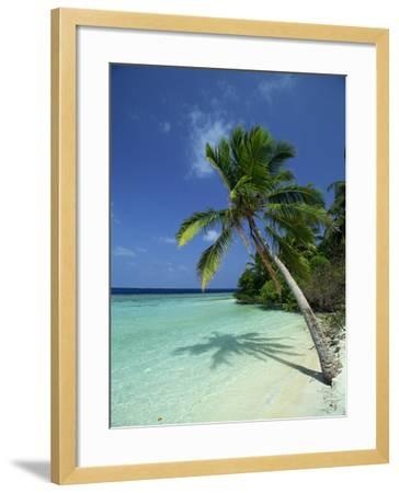 Palm Tree on a Tropical Beach on Embudu in the Maldive Islands, Indian Ocean-Fraser Hall-Framed Photographic Print