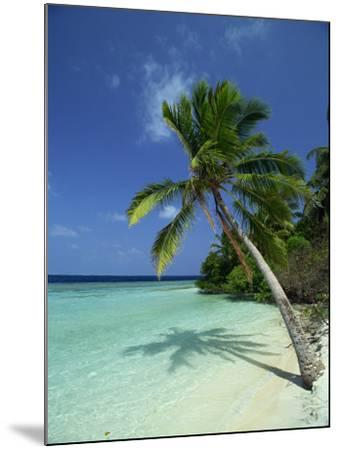 Palm Tree on a Tropical Beach on Embudu in the Maldive Islands, Indian Ocean-Fraser Hall-Mounted Photographic Print