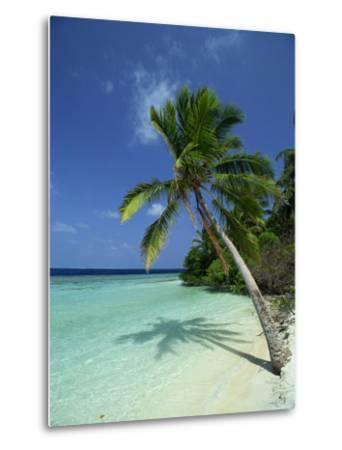 Palm Tree on a Tropical Beach on Embudu in the Maldive Islands, Indian Ocean-Fraser Hall-Metal Print