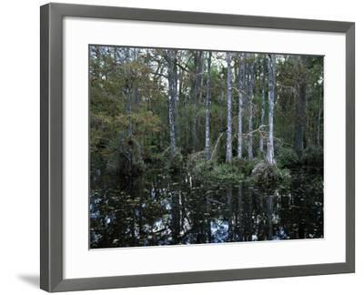 Alligators in Swamp Waters at Babcock Wilderness Ranch Near Fort Myers, Florida, USA-Fraser Hall-Framed Photographic Print