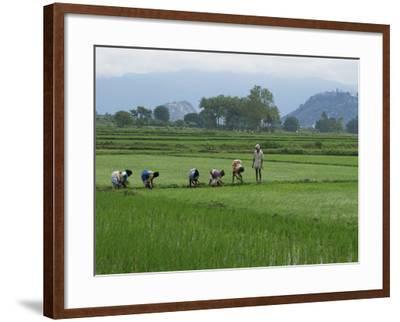 Line of People Planting Rice, Working the Rice Fields Near Madurai, Tamil Nadu, India-Robert Harding-Framed Photographic Print
