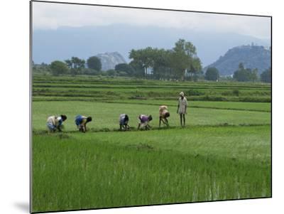 Line of People Planting Rice, Working the Rice Fields Near Madurai, Tamil Nadu, India-Robert Harding-Mounted Photographic Print