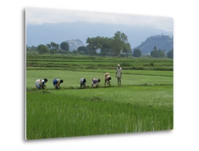 Line of People Planting Rice, Working the Rice Fields Near Madurai, Tamil Nadu, India-Robert Harding-Metal Print