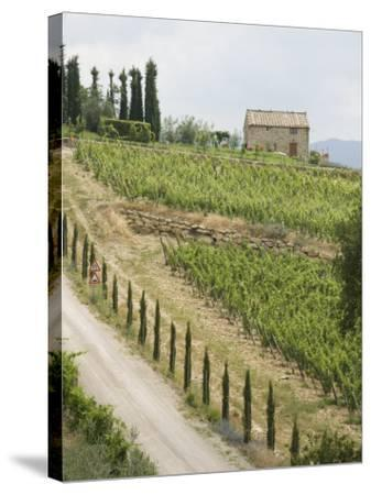 Typical View of the Tuscan Landscape, Le Crete, Tuscany, Italy, Europe-Robert Harding-Stretched Canvas Print