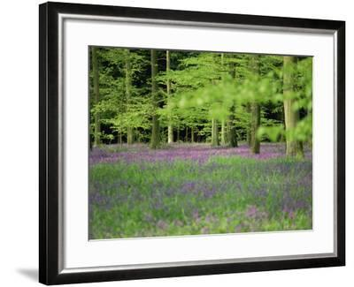 Wild Flowers in Spring, 100 Acres, Forest of Bere, Hampshire, England, United Kingdom, Europe-Legate Jane-Framed Photographic Print