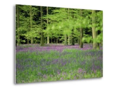Wild Flowers in Spring, 100 Acres, Forest of Bere, Hampshire, England, United Kingdom, Europe-Legate Jane-Metal Print