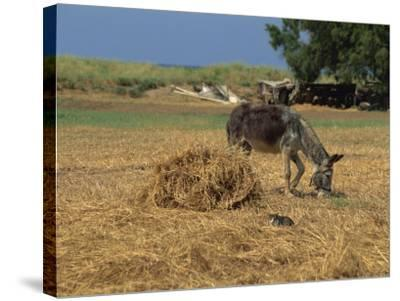 Donkey and Cat, Kastelli, Chania District, Crete, Greek Islands, Greece, Europe-O'callaghan Jane-Stretched Canvas Print