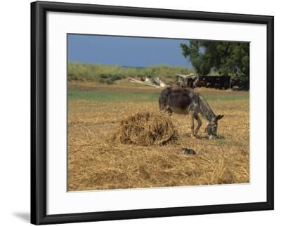 Donkey and Cat, Kastelli, Chania District, Crete, Greek Islands, Greece, Europe-O'callaghan Jane-Framed Photographic Print
