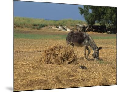 Donkey and Cat, Kastelli, Chania District, Crete, Greek Islands, Greece, Europe-O'callaghan Jane-Mounted Photographic Print