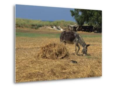 Donkey and Cat, Kastelli, Chania District, Crete, Greek Islands, Greece, Europe-O'callaghan Jane-Metal Print
