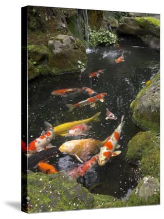 Colourful Carp in Typical Japanese Garden Pond, Higashiyama, Kyoto, Kansai, Honshu, Japan-Simanor Eitan-Stretched Canvas Print