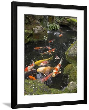 Colourful Carp in Typical Japanese Garden Pond, Higashiyama, Kyoto, Kansai, Honshu, Japan-Simanor Eitan-Framed Photographic Print