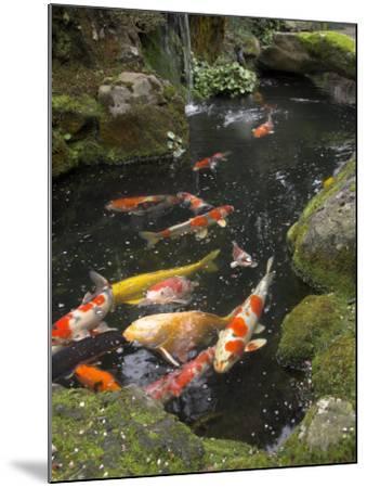 Colourful Carp in Typical Japanese Garden Pond, Higashiyama, Kyoto, Kansai, Honshu, Japan-Simanor Eitan-Mounted Photographic Print