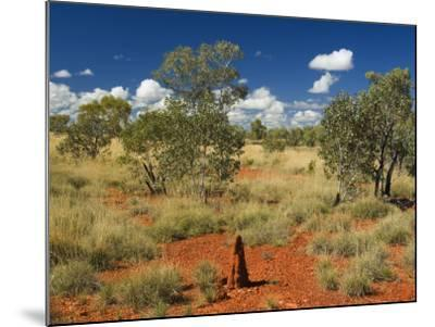 Termite Mounds in the Outback, Queensland, Australia, Pacific-Schlenker Jochen-Mounted Photographic Print