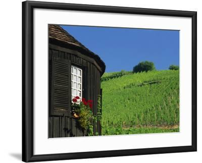 Vineyards on Hillside Behind Circular Timbered House, Riquewihr, Haut-Rhin, Alsace, France, Europe-Tomlinson Ruth-Framed Photographic Print