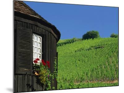 Vineyards on Hillside Behind Circular Timbered House, Riquewihr, Haut-Rhin, Alsace, France, Europe-Tomlinson Ruth-Mounted Photographic Print