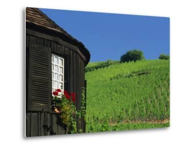 Vineyards on Hillside Behind Circular Timbered House, Riquewihr, Haut-Rhin, Alsace, France, Europe-Tomlinson Ruth-Metal Print