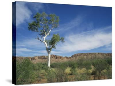 Landscape in the West Macdonnell Ranges Near Alice Springs in the Northern Territory, Australia-Wilson Ken-Stretched Canvas Print