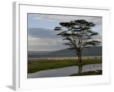 Lake Nakuru National Park, Kenya, East Africa, Africa-Groenendijk Peter-Framed Photographic Print